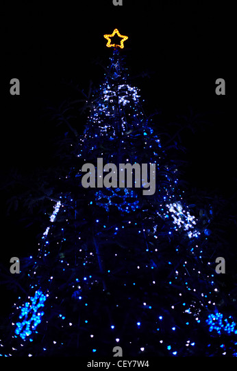 Real Christmas Tree With Blue Lights And Star At The Top   Stock Image