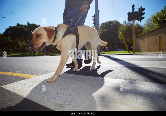 dog photo road - photo #7