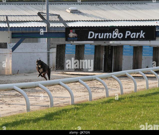 Wimbledon Stadium Lights: Racing Greyhound Stock Photos & Racing Greyhound Stock