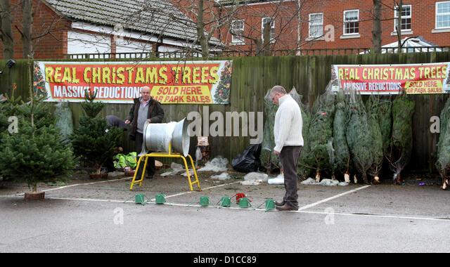 Sainsburys Christmas Trees