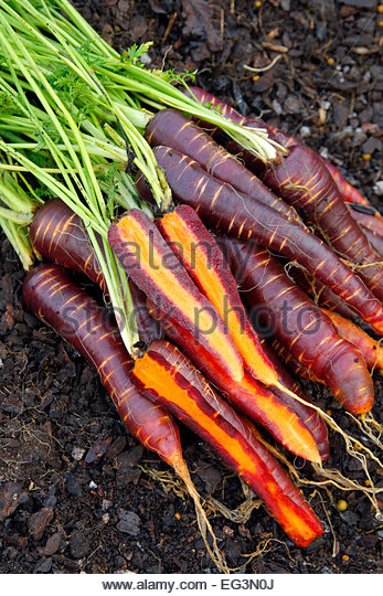 carrot more stock photos carrot more stock images alamy. Black Bedroom Furniture Sets. Home Design Ideas