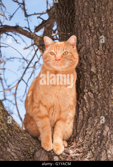 Tabby Cat Sitting Up Stock Photos & Tabby Cat Sitting Up ... Tabby Cat Sitting Up