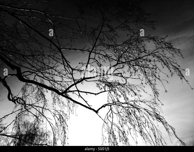 branch silhouette stock photos amp branch silhouette stock