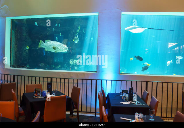 Waikiki aquarium stock photos