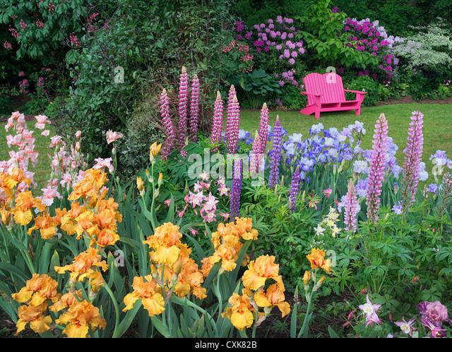 Garden Chair And Flower Garden. Schrieners Iris Gardens, Salem, Oregon.    Stock