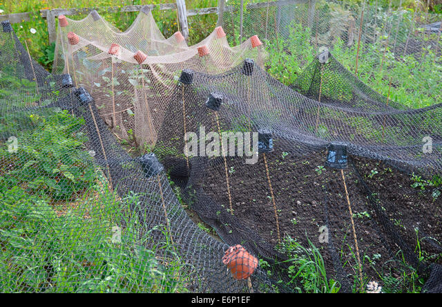 Garden Netting Stock Photos Garden Netting Stock Images Alamy