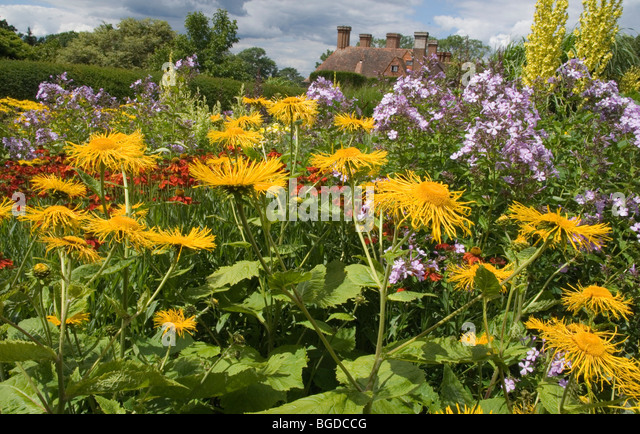 Wonderful Great Dixter Gardens Stock Photos  Great Dixter Gardens Stock  With Outstanding Telekia Speciosa Flowers At Great Dixter Gardens East Sussex  Stock Image With Archaic Golf Garden Dhaka Booking Also Hilton Garden Inn New York Time Square In Addition Orchid Garden Singapore Opening Hours And Garden Signs Uk As Well As Three Dots Garden Grove Additionally Green Garden Beach Resort And Spa From Alamycom With   Outstanding Great Dixter Gardens Stock Photos  Great Dixter Gardens Stock  With Archaic Telekia Speciosa Flowers At Great Dixter Gardens East Sussex  Stock Image And Wonderful Golf Garden Dhaka Booking Also Hilton Garden Inn New York Time Square In Addition Orchid Garden Singapore Opening Hours From Alamycom