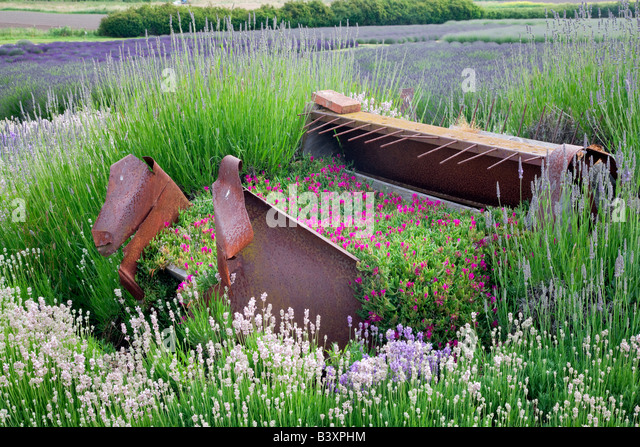 lavender willow stock photos lavender willow stock. Black Bedroom Furniture Sets. Home Design Ideas