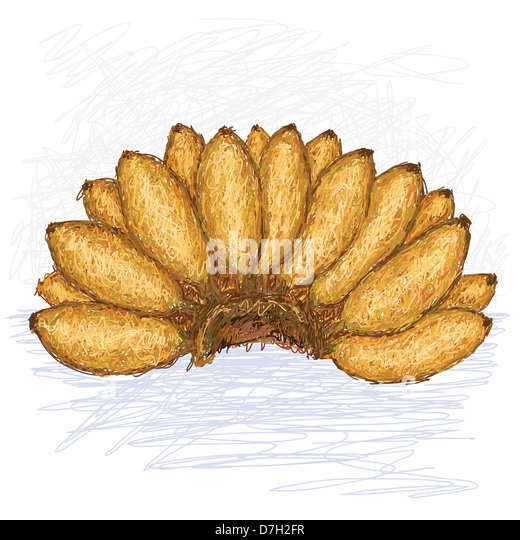 Banana 'Super Dwarf Cavendish' (Musa acuminata)