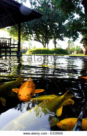 Koi fish painting stock photos koi fish painting stock for Colorful pond fish