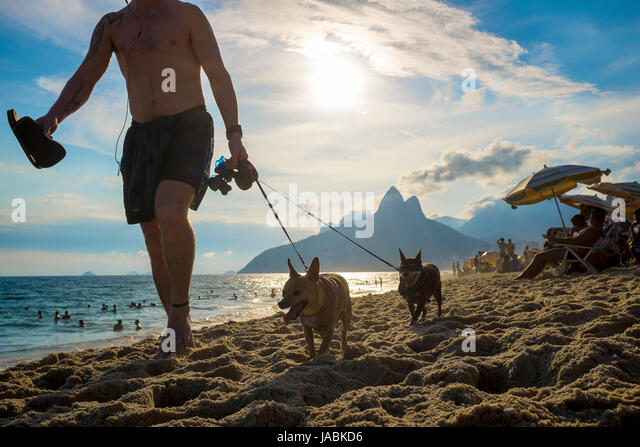 RIO DE JANEIRO - FEBRUARY 7, 2017: Man walking with two small dogs on Ipanema Beach with the sunset behind Two Brothers - Stock Image