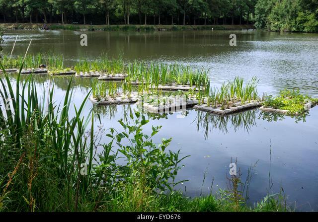 Nesting platform stock photos nesting platform stock for Floating fish pond