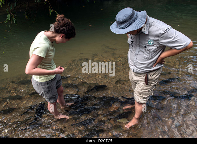 Fish massage stock photos fish massage stock images alamy for Fish pedicure dc