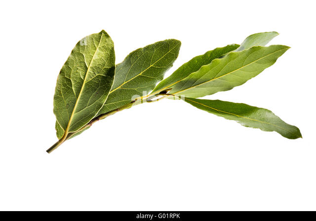 Bay wreath stock photos bay wreath stock images alamy - Cook bay leaves ...