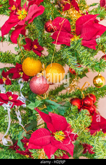 Euphorbia pulcherrima closeup stock photos euphorbia for Red and yellow christmas tree