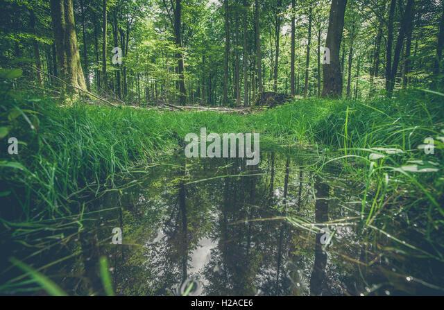 Puddle Reflection Wood Stock Photos & Puddle Reflection ...