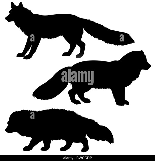 Arctic Fox Cut Out Stock Images & Pictures - Alamy