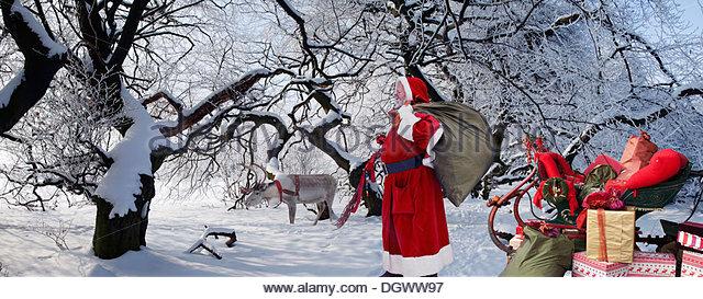 Sleigh reindeer stock photos
