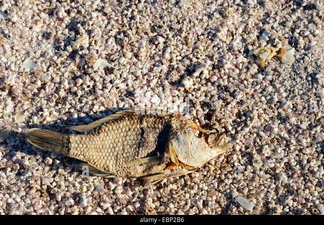 California shell beach stock photos california shell for Salton sea fishing