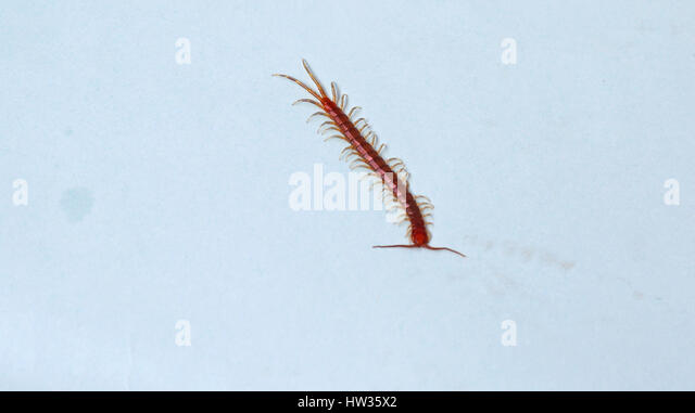 Centipede Wallpaper - Android Apps on Google Play