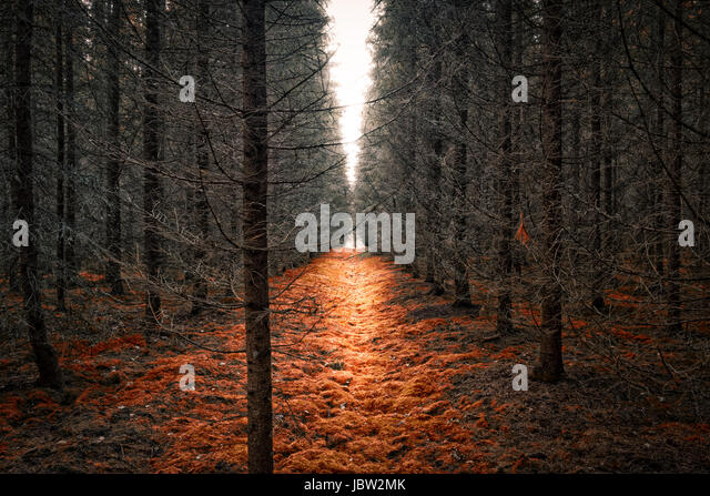 Scenic landscape with dry forest and bright light - Stock Image