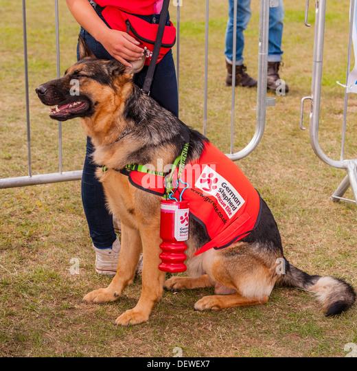 Dog Show In Norfolk June