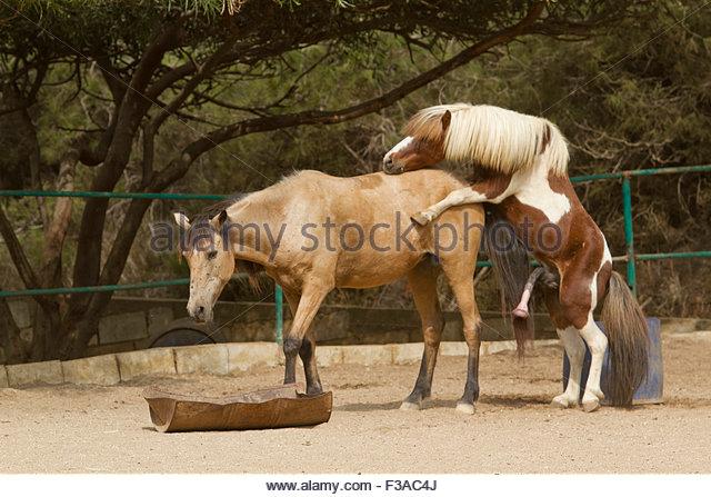 Horse mating – Älypuhelimen käyttö ulkomailla