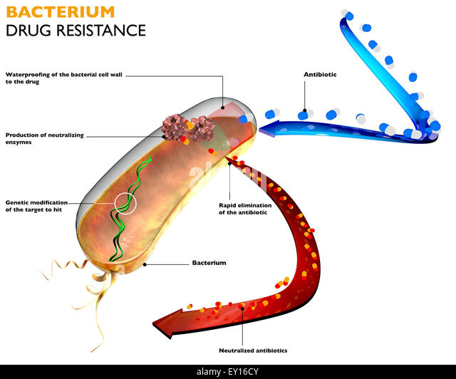 the super antibiotics and the resistance of bacteria Fact sheet: antibiotics are medicines used to prevent and treat bacterial infections antibiotic resistance occurs when bacteria change in response to the use of these medicines bacteria, not humans, become antibiotic resistant these bacteria may then infect humans and are harder to treat than.