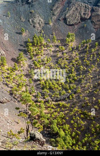 fertile soil volcano - photo #18