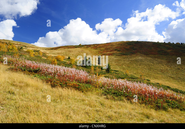 mountain meadow autumn above - photo #23
