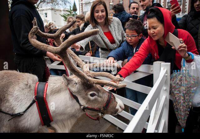 meet reindeer london