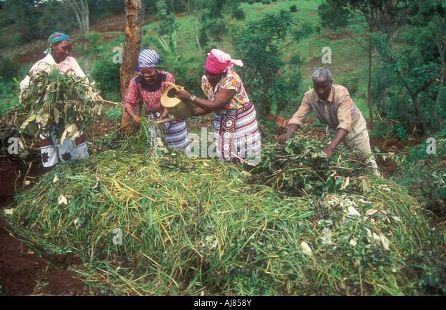 Smallscale farmers make compost on their farm