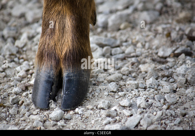 deer hooves - photo #13