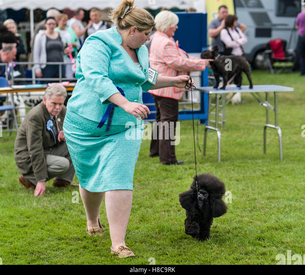 Border Union Dog Show  Results