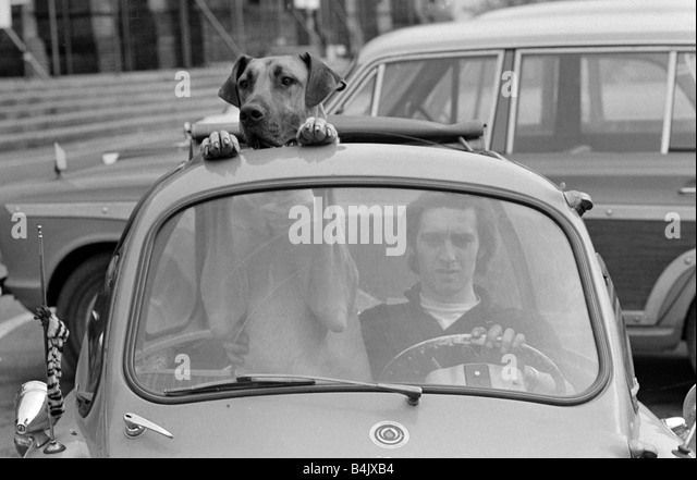 Dog Car Window Black And White Stock Photos Images Alamy