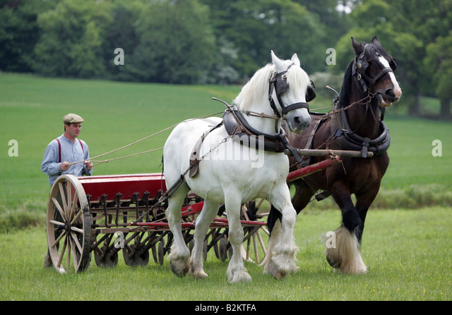 how to work safely in horse farm