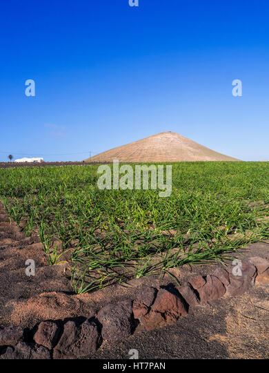fertile soil volcano - photo #3