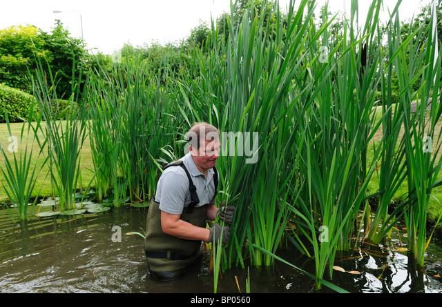 50 Year Old Man Gardening Stock Photos 50 Year Old Man