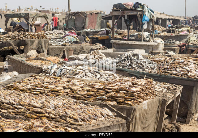 fish market senegal stock photos fish market senegal