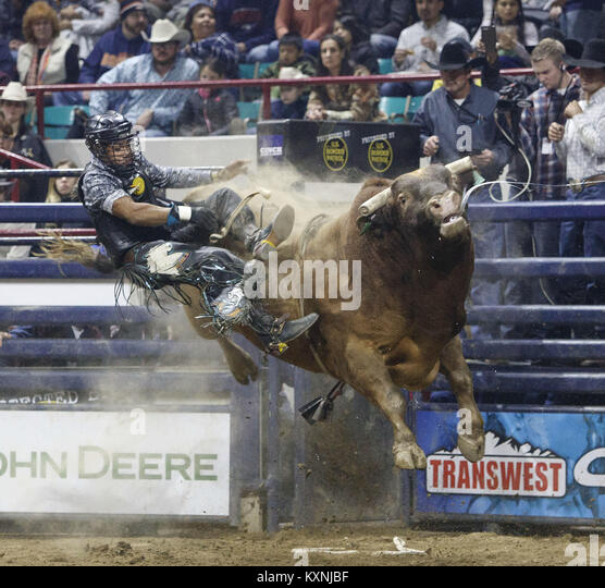 Denver Shooting July 2018: Bucked Off Bull Stock Photos & Bucked Off Bull Stock