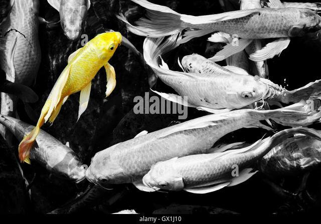 Koi Aquarium Stock Photos Koi Aquarium Stock Images Alamy