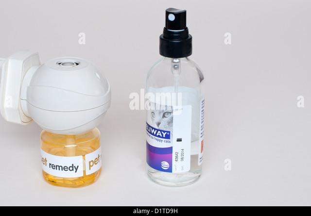 is baby formula safe for kittens
