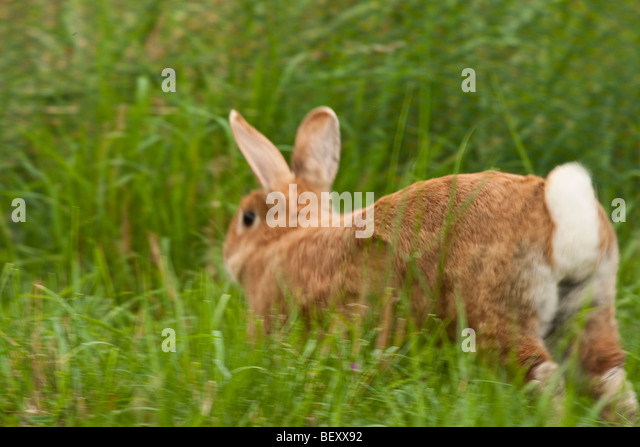 Running Rabbit Stock Photos & Running Rabbit Stock Images ...