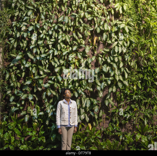 a woman looking up at a high wall covered in climbing plants and foliage - Climbing Plants