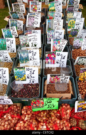 flower bulbs for sale free download