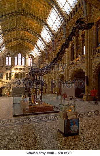 Foyer Museum London : Natural history museum dinosaur london stock photos