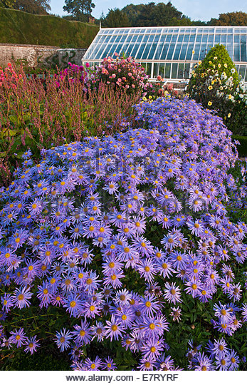 Uk Garden September Border Stock Photos Uk Garden