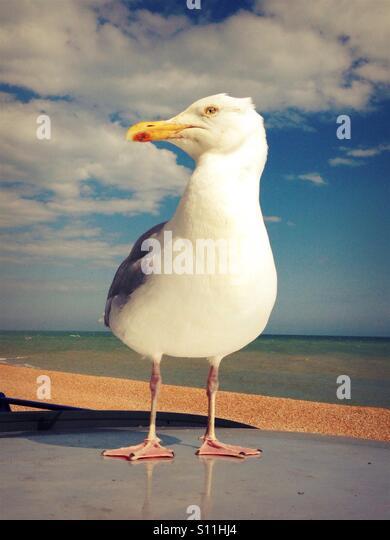 Seagull Car Service Brighton Beach