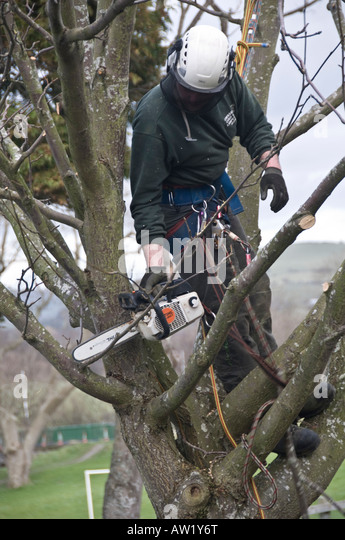 how to cut a tree branch with a chainsaw