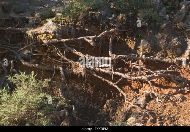 Trees soil erosion stock photos trees soil erosion stock for Soil as a system